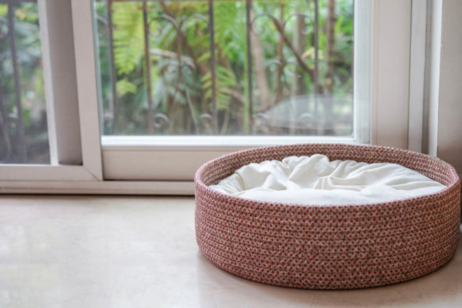 Stylish and Pet Friendly Home Upgrades
